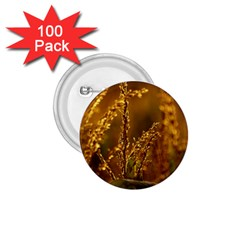 Field 1 75  Button (100 Pack)