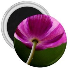 Poppy 3  Button Magnet by Siebenhuehner