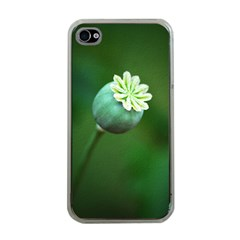 Poppy Capsules Apple Iphone 4 Case (clear) by Siebenhuehner