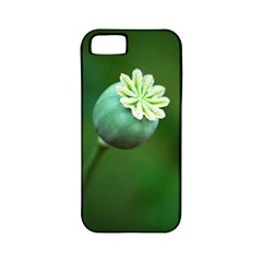 Poppy Capsules Apple Iphone 5 Classic Hardshell Case (pc+silicone) by Siebenhuehner