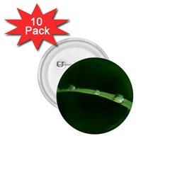 Pearls   1 75  Button (10 Pack) by Siebenhuehner