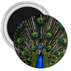 Peacock 3  Button Magnet by Siebenhuehner