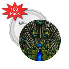 Peacock 2 25  Button (100 Pack) by Siebenhuehner