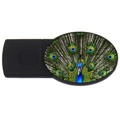 Peacock 2gb Usb Flash Drive (oval) by Siebenhuehner