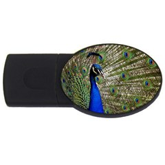 Peacock 2gb Usb Flash Drive (oval) by Siebenhuehner