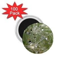Dandelion 1 75  Button Magnet (100 Pack) by Siebenhuehner