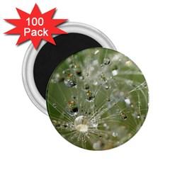 Dandelion 2 25  Button Magnet (100 Pack) by Siebenhuehner