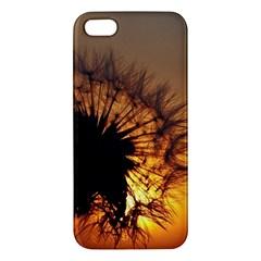 Dandelion Iphone 5 Premium Hardshell Case by Siebenhuehner
