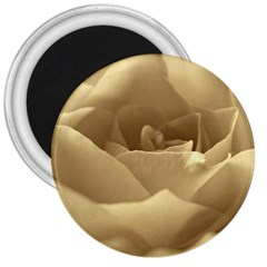 Rose  3  Button Magnet by Siebenhuehner