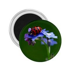 Good Luck 2 25  Button Magnet by Siebenhuehner