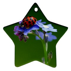 Good Luck Star Ornament (two Sides) by Siebenhuehner