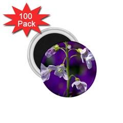 Cuckoo Flower 1 75  Button Magnet (100 Pack) by Siebenhuehner