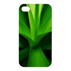 Yucca Palm  Apple Iphone 4/4s Hardshell Case by Siebenhuehner
