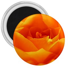 Rose 3  Button Magnet by Siebenhuehner