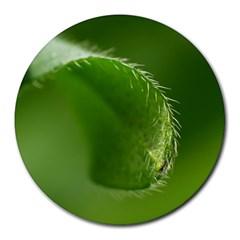 Leaf 8  Mouse Pad (round) by Siebenhuehner