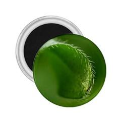 Leaf 2 25  Button Magnet by Siebenhuehner