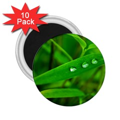 Bamboo Leaf With Drops 2 25  Button Magnet (10 Pack) by Siebenhuehner