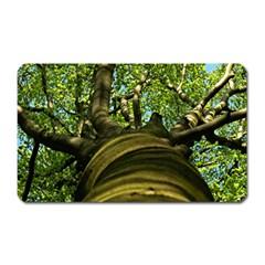 Tree Magnet (rectangular) by Siebenhuehner