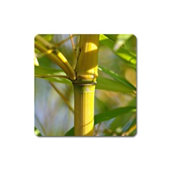 Bamboo Magnet (square) by Siebenhuehner