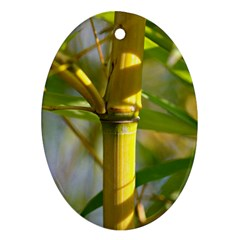 Bamboo Oval Ornament (two Sides) by Siebenhuehner