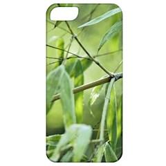 Bamboo Apple Iphone 5 Classic Hardshell Case by Siebenhuehner