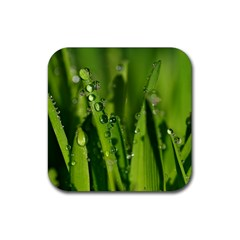 Grass Drops Drink Coaster (square) by Siebenhuehner