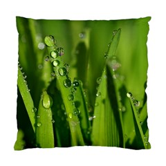 Grass Drops Cushion Case (single Sided)  by Siebenhuehner