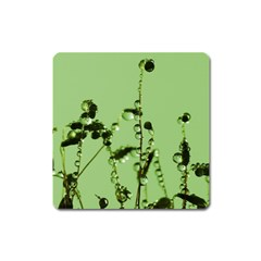 Mint Drops  Magnet (square) by Siebenhuehner