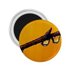 Tree Drops  2 25  Button Magnet by Siebenhuehner
