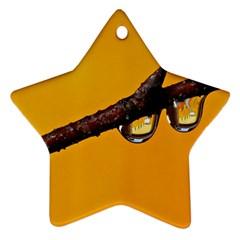 Tree Drops  Star Ornament by Siebenhuehner