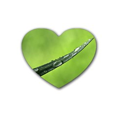 Green Drops Drink Coasters 4 Pack (heart)  by Siebenhuehner