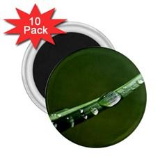 Grass Drops 2 25  Button Magnet (10 Pack) by Siebenhuehner