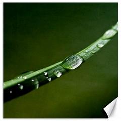 Grass Drops Canvas 16  X 16  (unframed) by Siebenhuehner
