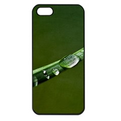 Grass Drops Apple Iphone 5 Seamless Case (black) by Siebenhuehner