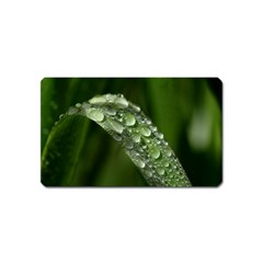 Grass Drops Magnet (name Card) by Siebenhuehner