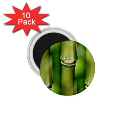 Bamboo 1 75  Button Magnet (10 Pack) by Siebenhuehner