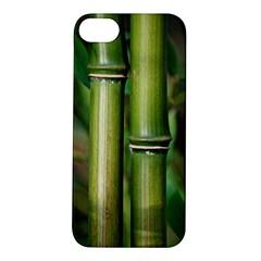 Bamboo Apple Iphone 5s Hardshell Case by Siebenhuehner