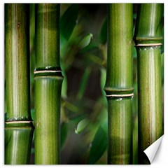 Bamboo Canvas 12  X 12  (unframed) by Siebenhuehner