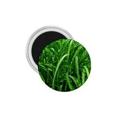 Grass 1 75  Button Magnet by Siebenhuehner