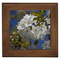 Cherry Blossom Framed Ceramic Tile by Siebenhuehner