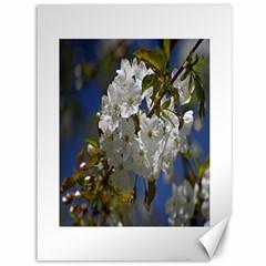 Cherry Blossom Canvas 36  X 48  (unframed) by Siebenhuehner