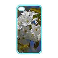 Cherry Blossom Apple Iphone 4 Case (color) by Siebenhuehner