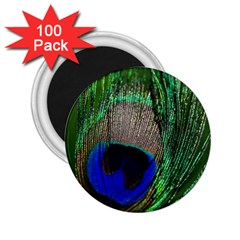 Peacock 2 25  Button Magnet (100 Pack) by Siebenhuehner