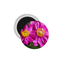 Flower 1 75  Button Magnet by Siebenhuehner
