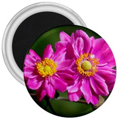 Flower 3  Button Magnet by Siebenhuehner