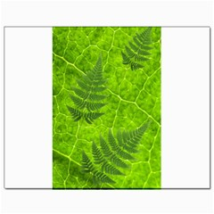 Leaf & Leaves Canvas 11  x 14  (Unframed)