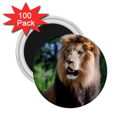 Regal Lion 2 25  Button Magnet (100 Pack) by AnimalLover