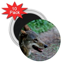 Red Wolf 2 25  Button Magnet (10 Pack) by AnimalLover