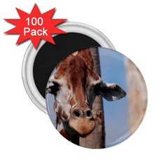 Cute Giraffe 2 25  Button Magnet (100 Pack) by AnimalLover