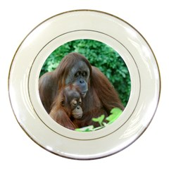 Orangutan Family Porcelain Display Plate by AnimalLover